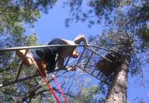 Best Climbing Tree Stand under 200