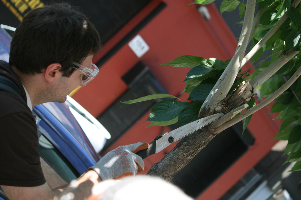 Best Tree Pruner