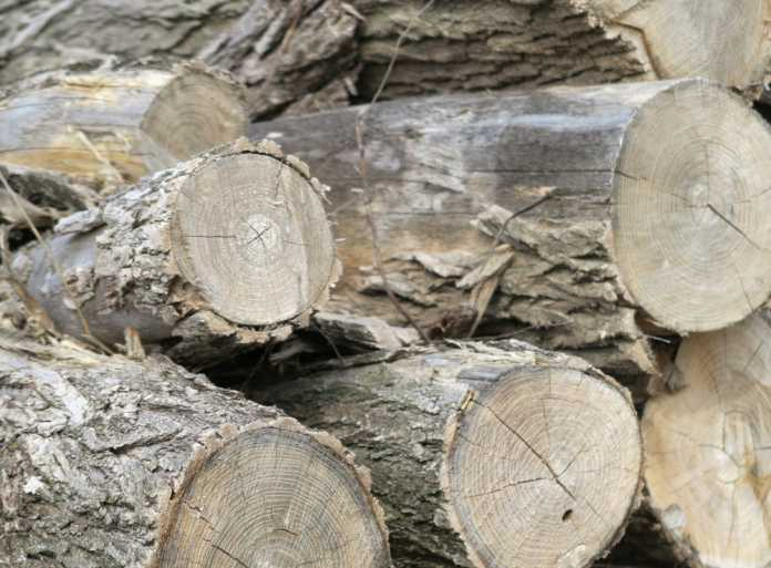 best splitting maul for firewood