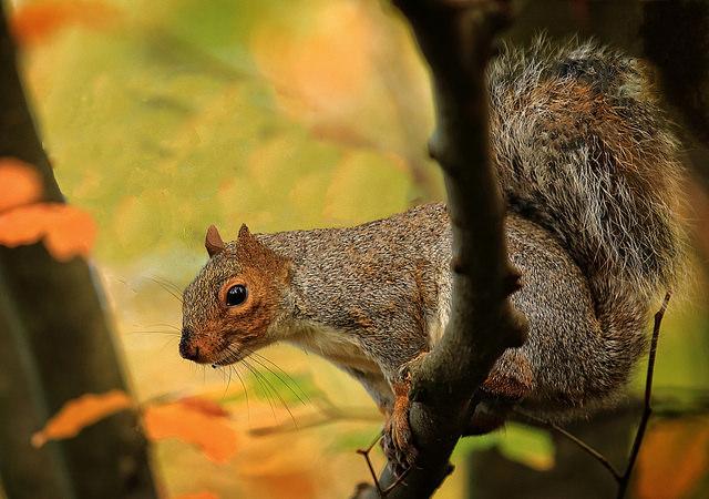 Best Pellet Gun for Squirrels