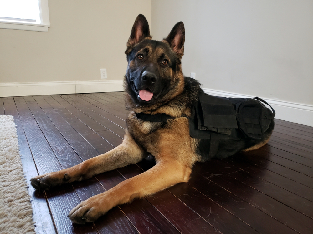 german shepherd tactical vest