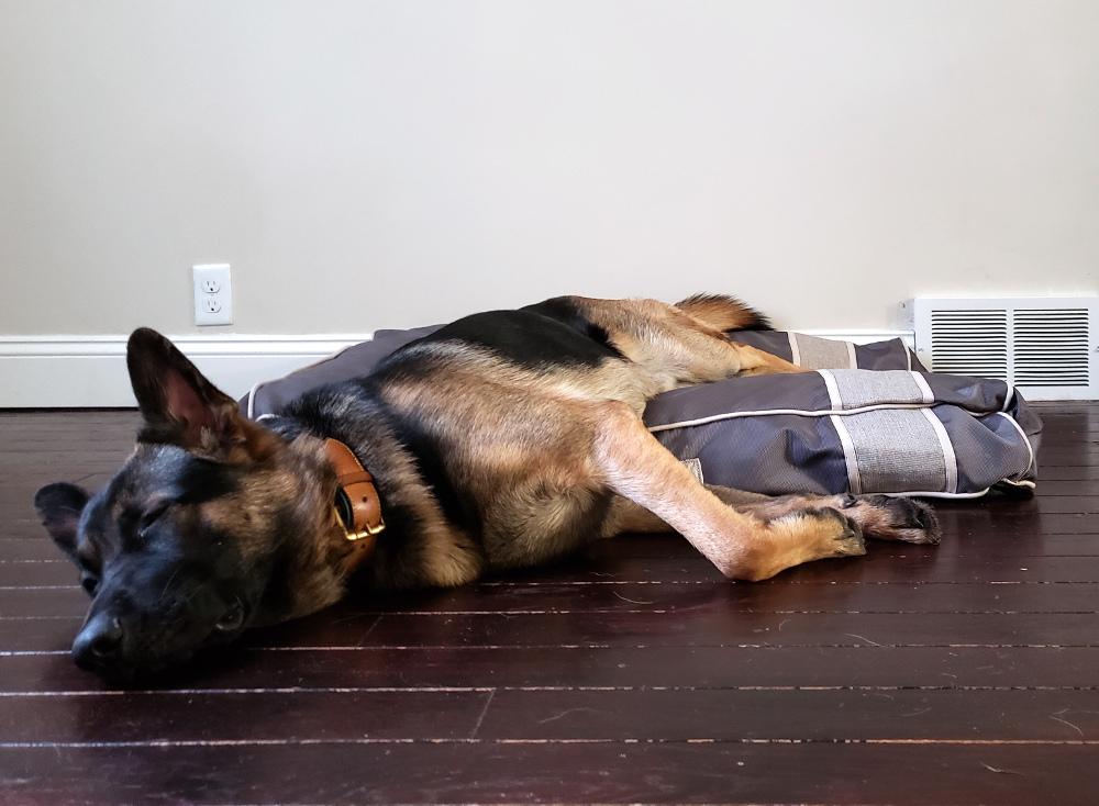 best washable dog bed