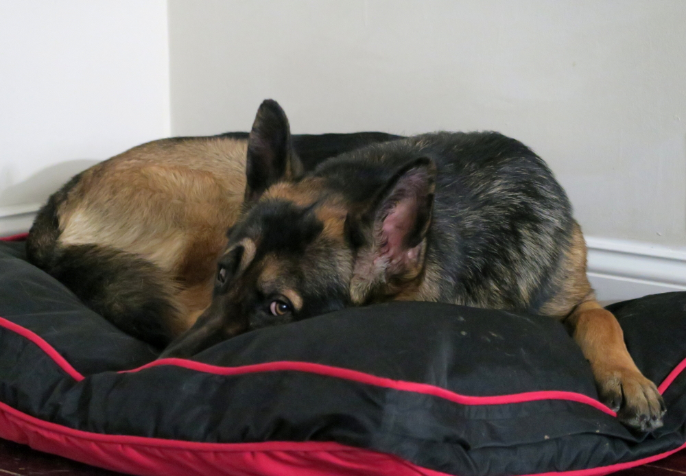easy to clean dog beds for large dogs