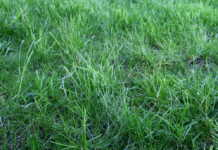 best lawn fertilizer brands