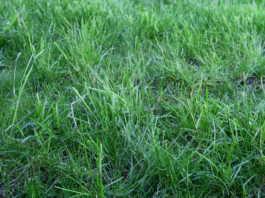 best lawn fertilizer brands