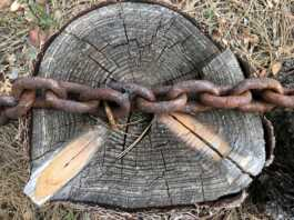 best chain for pulling stump